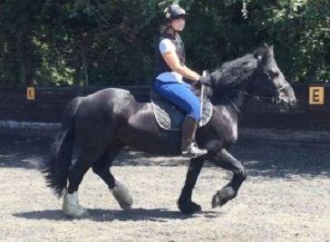 Willowbrook Riding Centre