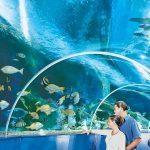 blue-reef-aquarium