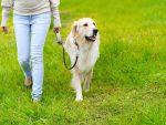 Happy Hounds Dog Walking